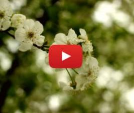 Jarní novinky a jejich trailery (2014)