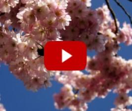 Jarní novinky a jejich trailery (2015)
