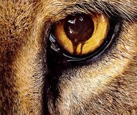 Seriálové osudy: Zoo