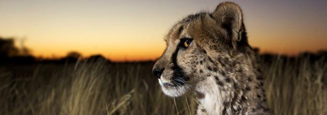 Nejdivočejší Afrika (Wildest Africa) — 1. série