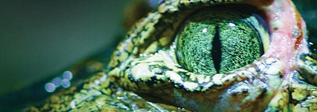 Nebezpeční tvorové Austrálie (72 Dangerous Animals: Australia)