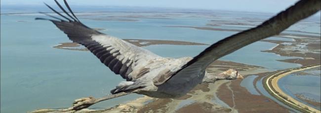 Země z ptačí perspektivy (Earthflight)