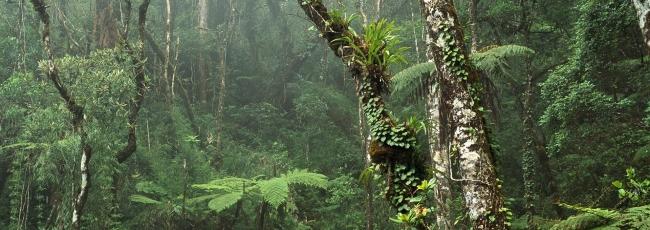 Expedice Borneo (Expedition Borneo)