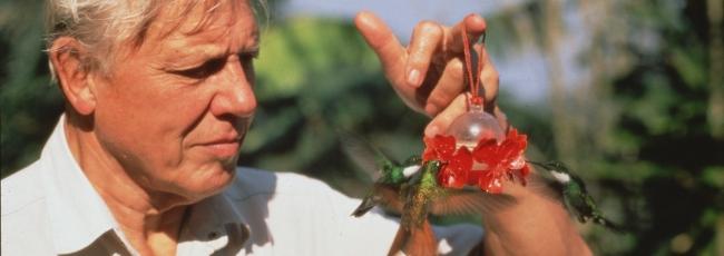 Ptačí svět (Life of Birds, The) — 1. série