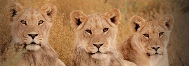 Největší zabijáci Afriky (Africa's Deadliest)