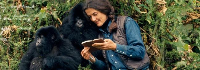 Fosseyová a tajemství v mlze (Dian Fossey: Secrets in the Mist)