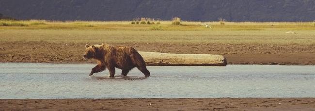 Na Aljašku (Into Alaska) — 1. série