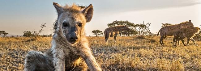 Serengeti (Serengeti) — 1. série