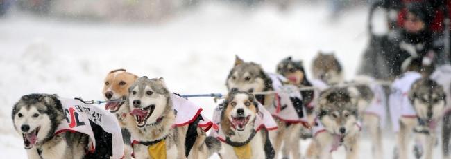 Iditarod (Iditarod) — 1. série