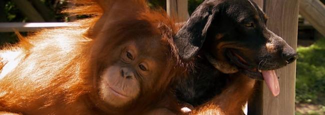 Netradiční zvířecí přátelství (Unlikely Animal Friends)