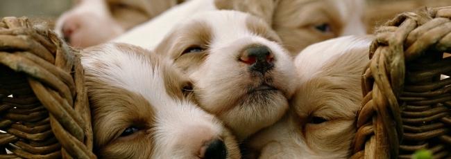 Seznámení se psy (Dogs 101)