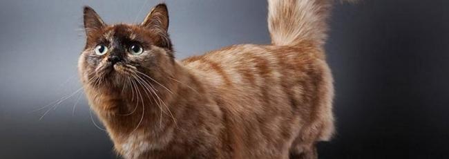 Seznámení s kočkami (Cats 101) — 1. série