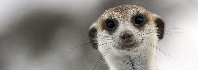 Království surikat (Meerkat Manor) — 1. série