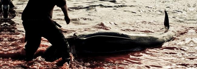 Boj o velryby - Pobřeží vikingů (Whale Wars: Viking Shores) — 1. série