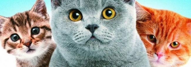 Musíme milovat kočky (Must Love Cats) — 1. série