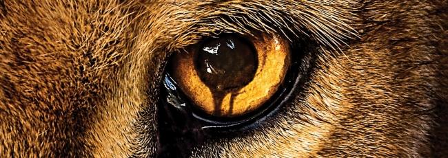 Zoo (Zoo) — 1. série